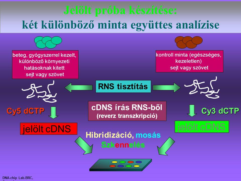 jelölt cDNS Cy5 dCTP Cy3 dCTP Hibridizáció, mosás Szkennelés DNA-chip Lab.BRC, Szeged Jelölt próba készítése: két különböző minta együttes analízise b