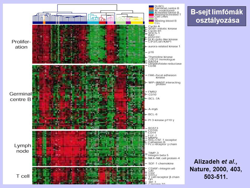 B-sejt limfómák osztályozása Alizadeh et al., Nature, 2000, 403, 503-511.