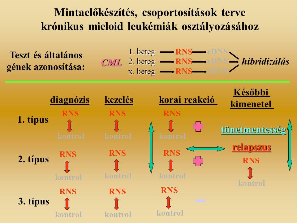 Mintaelőkészítés, csoportosítások terve krónikus mieloid leukémiák osztályozásához Teszt és általános gének azonosítása: CML 1. beteg 2. beteg x. bete