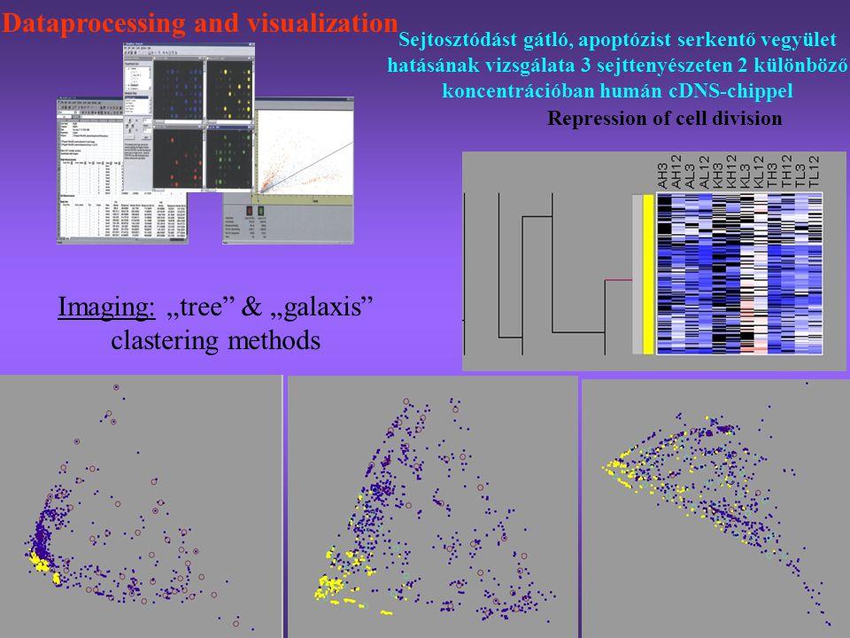 "Dataprocessing and visualization Repression of cell division Imaging: ""tree"" & ""galaxis"" clastering methods Sejtosztódást gátló, apoptózist serkentő v"