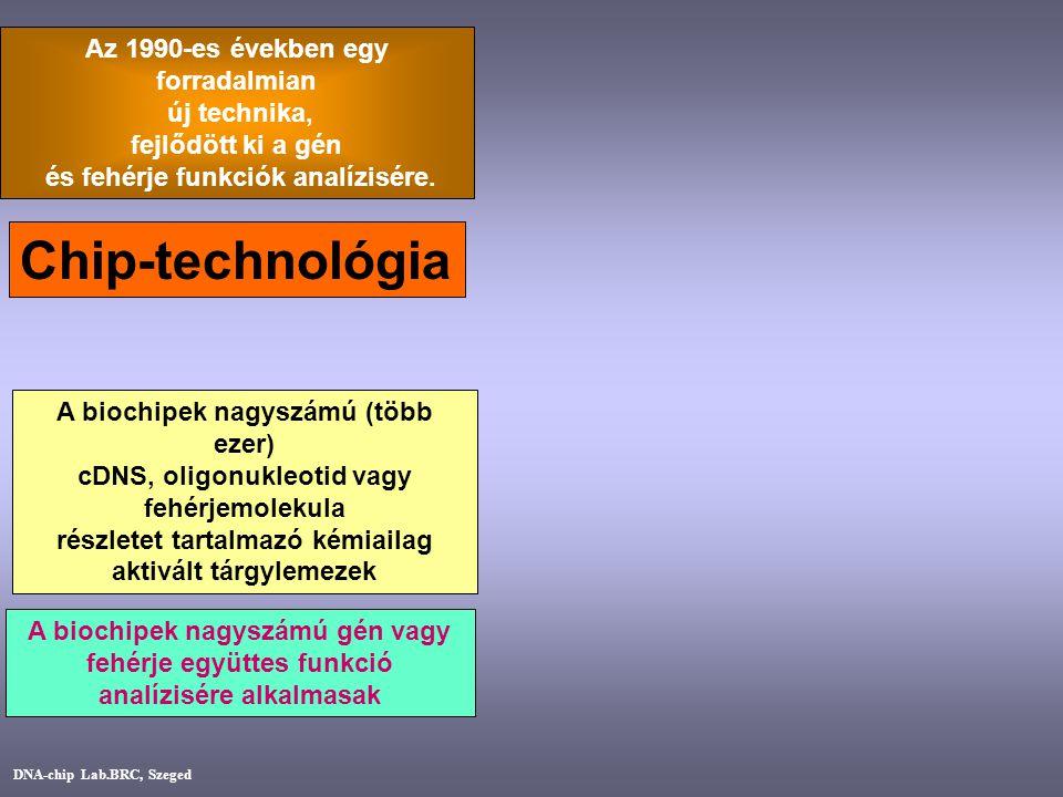 A biochipek nagyszámú gén vagy fehérje együttes funkció analízisére alkalmasak A biochipek nagyszámú (több ezer) cDNS, oligonukleotid vagy fehérjemole