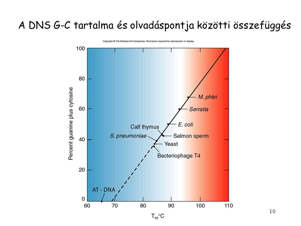 10 A DNS G-C tartalma és olvadáspontja közötti összefüggés