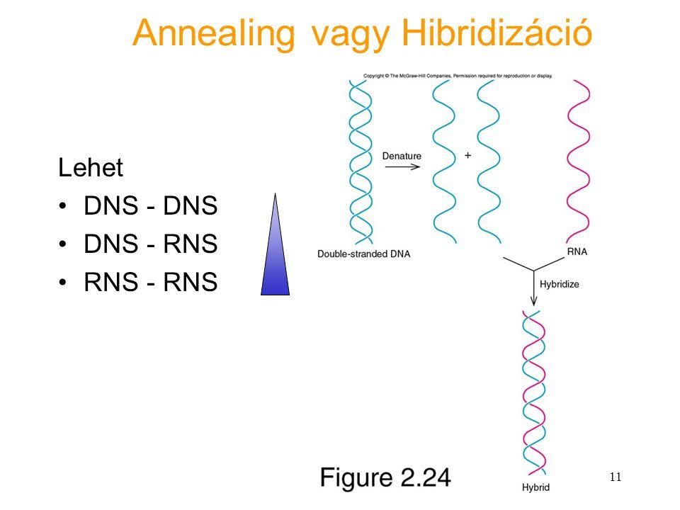 11 Annealing vagy Hibridizáció Lehet DNS - DNS DNS - RNS RNS - RNS