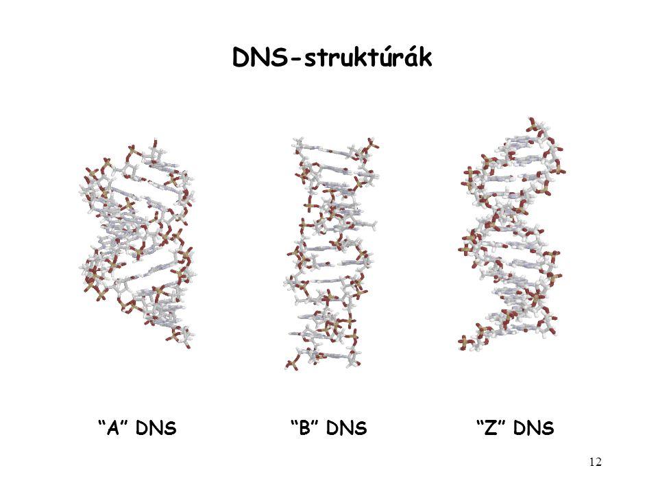 "12 ""A"" DNS""B"" DNS""Z"" DNS DNS-struktúrák"