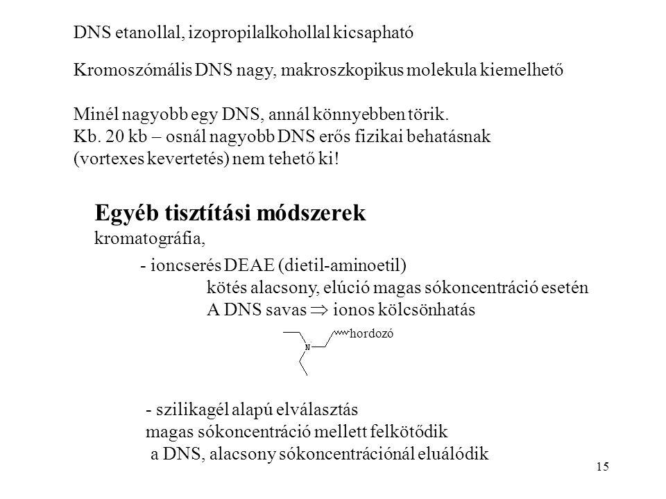 15 DNS etanollal, izopropilalkohollal kicsapható Kromoszómális DNS nagy, makroszkopikus molekula kiemelhető Minél nagyobb egy DNS, annál könnyebben tö
