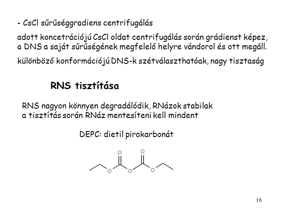16 - CsCl sűrűséggradiens centrifugálás adott koncetrációjú CsCl oldat centrifugálás során grádienst képez, a DNS a saját sűrűségének megfelelő helyre