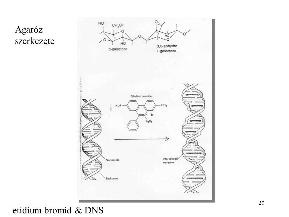 20 etidium bromid & DNS Agaróz szerkezete