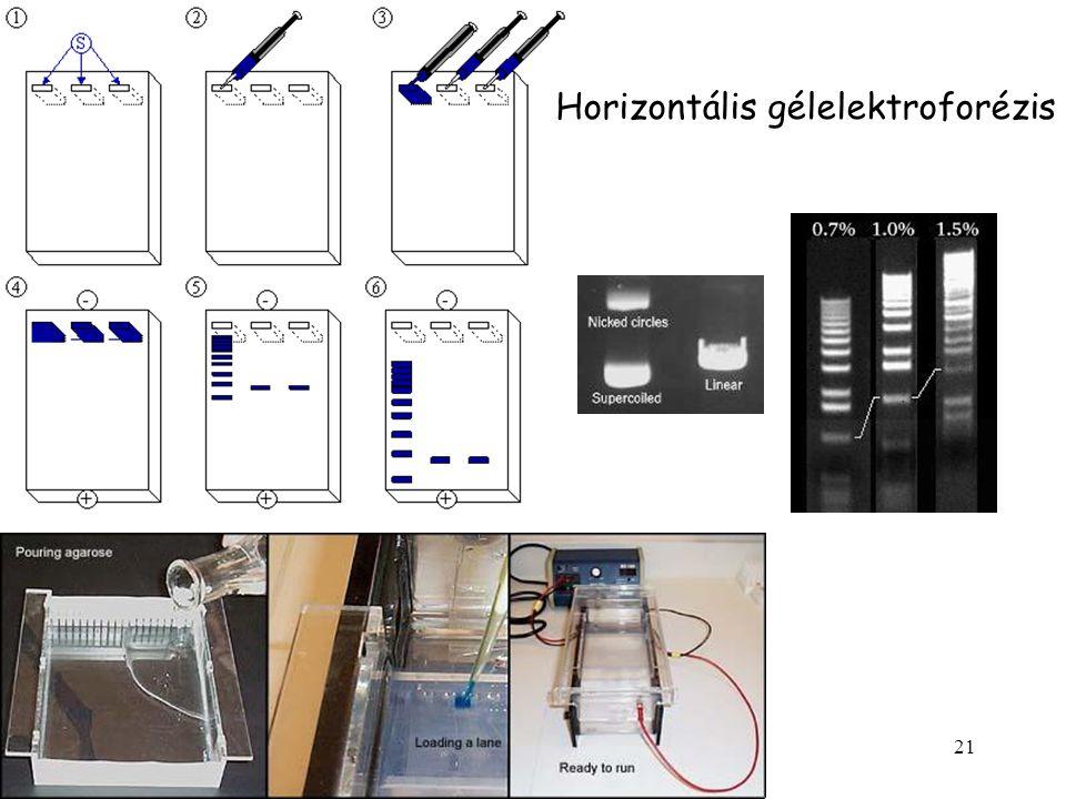 21 Horizontális gélelektroforézis