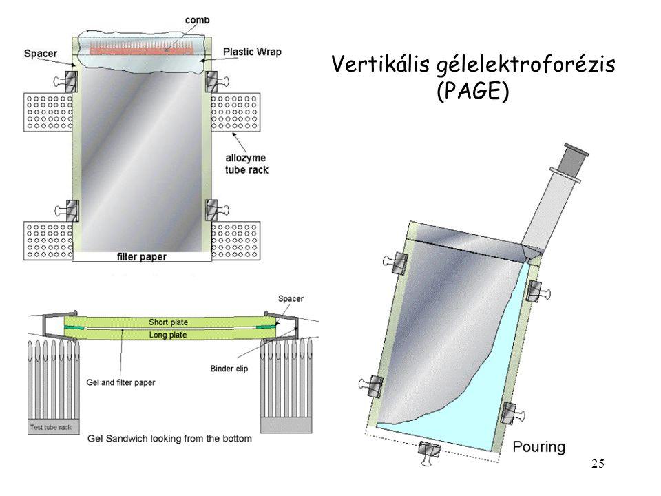 25 Vertikális gélelektroforézis (PAGE)