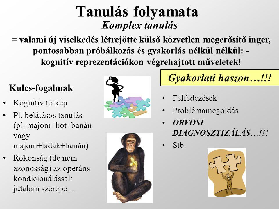 Tanulás folyamata Komplex tanulás Kognitív térkép Pl. belátásos tanulás (pl. majom+bot+banán vagy majom+ládák+banán) Rokonság (de nem azonosság) az op