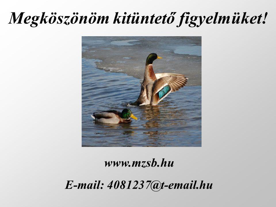 Megköszönöm kitüntető figyelmüket! www.mzsb.hu E-mail: 4081237@t-email.hu