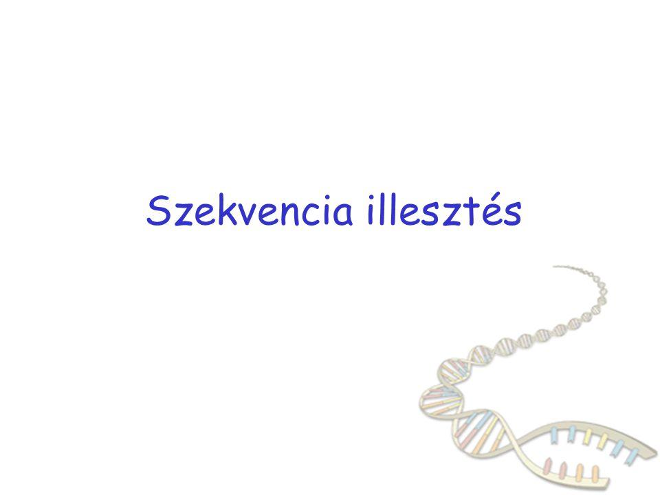 KERESÉS AZ ADATBNKOKBAN: HASONLÓSÁG Elsődleges DNS vagy fehérje szekvencia összehasonlítása más elsődleges szekvenciákhoz abban a reményben, hogy annak a funkciója ismert a kísérletek szükségessége analogikus gondolkodás ha valamilyen fehérje hasonlít valami ismert funkiójú fehérjéhez, akkor a funkció is hasonló kérdés: mi hordozza a funkciót.
