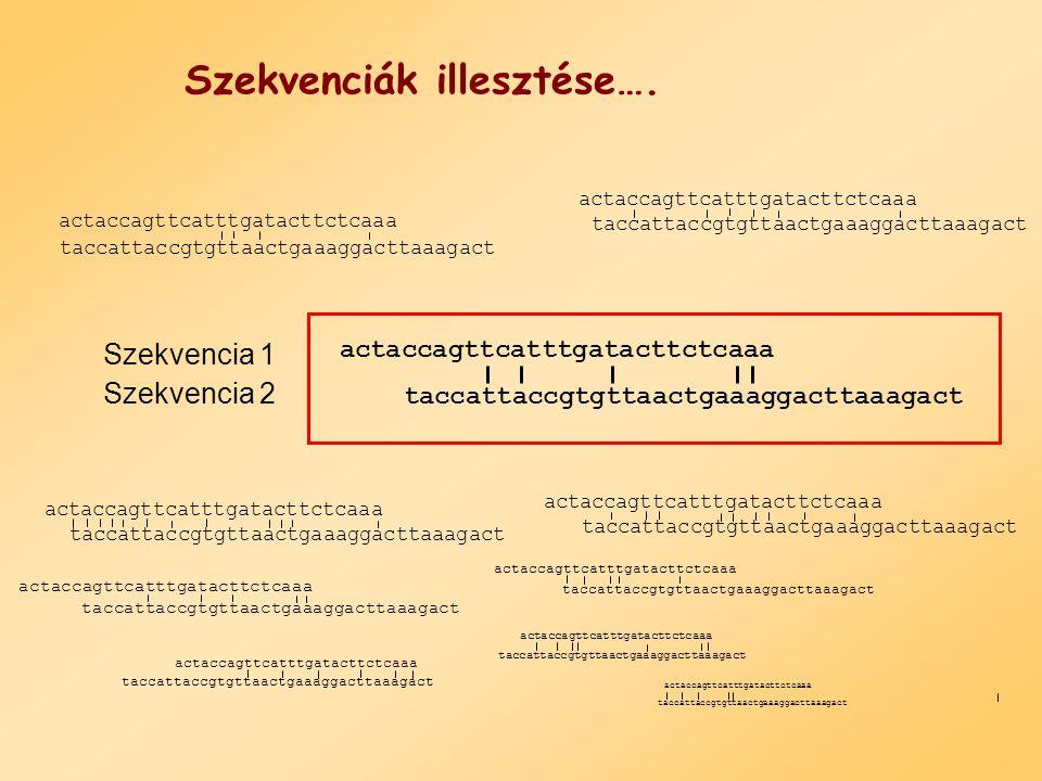DNS pontozási rendszer actaccagttcatttgatacttctcaaa taccattaccgtgttaactgaaaggacttaaagact Szekvencia1 Szekvencia 2 AGCTA1000G0100C0010T0001AGCTA1000G0100C0010T0001 Illik: 1 Nem illik: 0 pont = 5