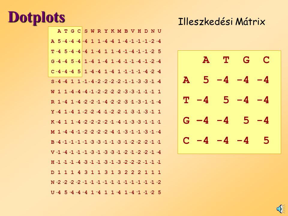 DNS pontozási rendszer Negatív érték bünteti az eltéréseket: A T C G A 5-4-4-4 T-4 5-4-4 C-4-4 5-4 G-4 -4-4 5 Illik: 5 Nem illik: 19 Score: 5 x 5 + 19 x (-4) = - 51 actaccagttcatttgatacttctcaaa taccattaccgtgttaactgaaaggacttaaagact Szekvencia1 Szekvencia 2