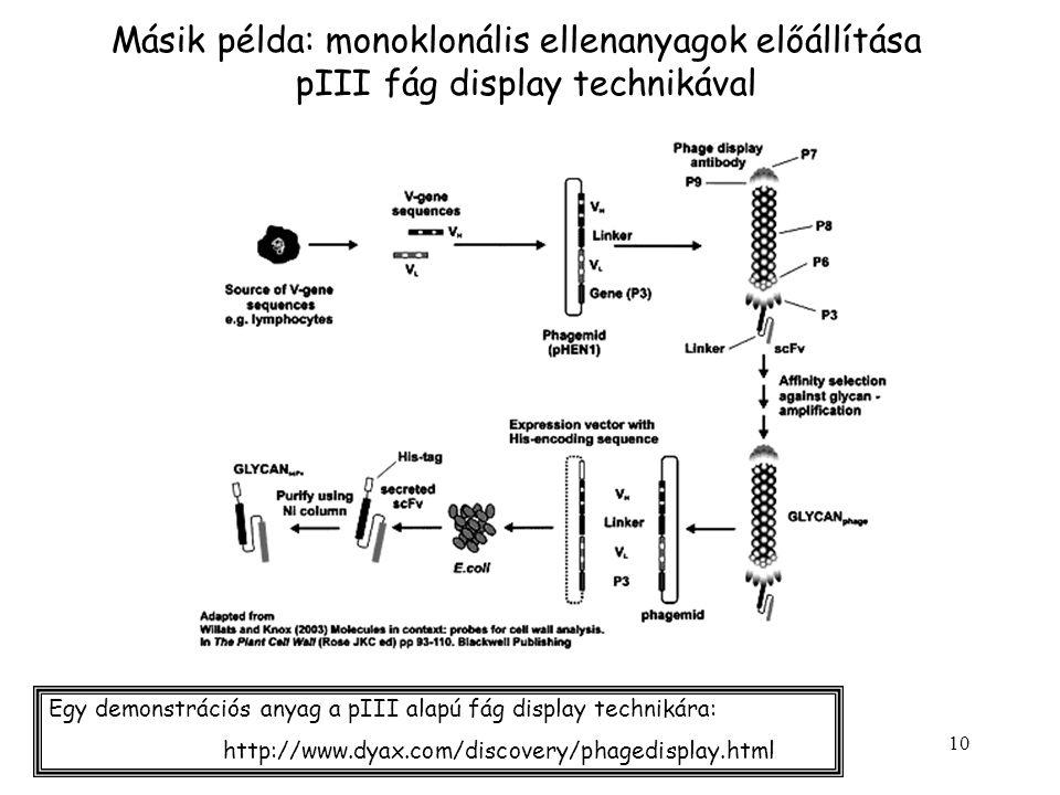 10 Másik példa: monoklonális ellenanyagok előállítása pIII fág display technikával http://www.dyax.com/discovery/phagedisplay.html Egy demonstrációs anyag a pIII alapú fág display technikára:
