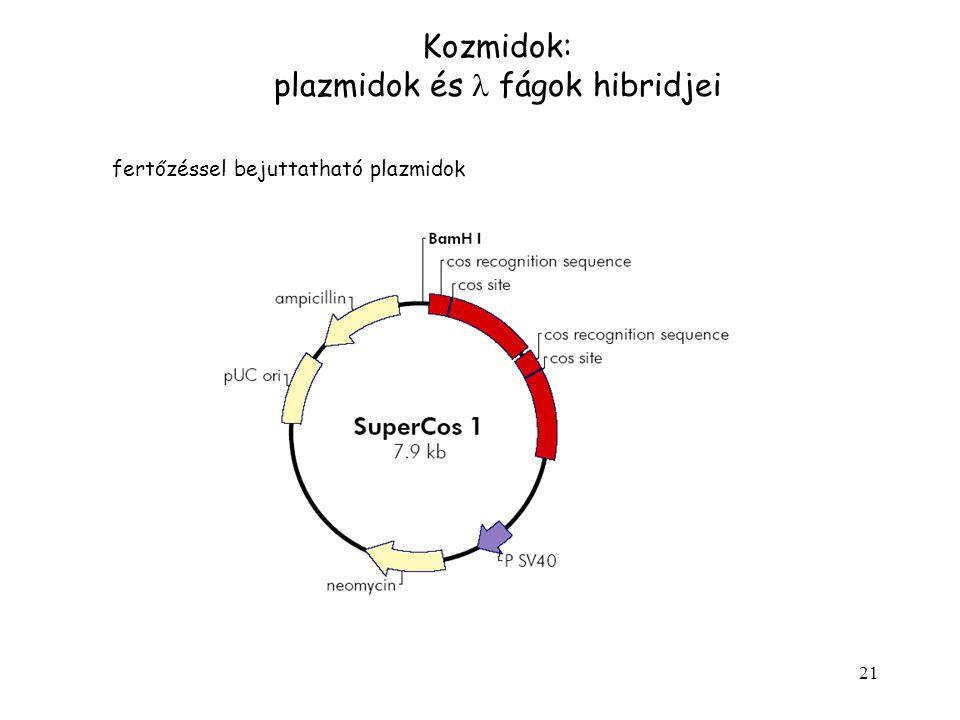 21 Kozmidok: plazmidok és fágok hibridjei fertőzéssel bejuttatható plazmidok