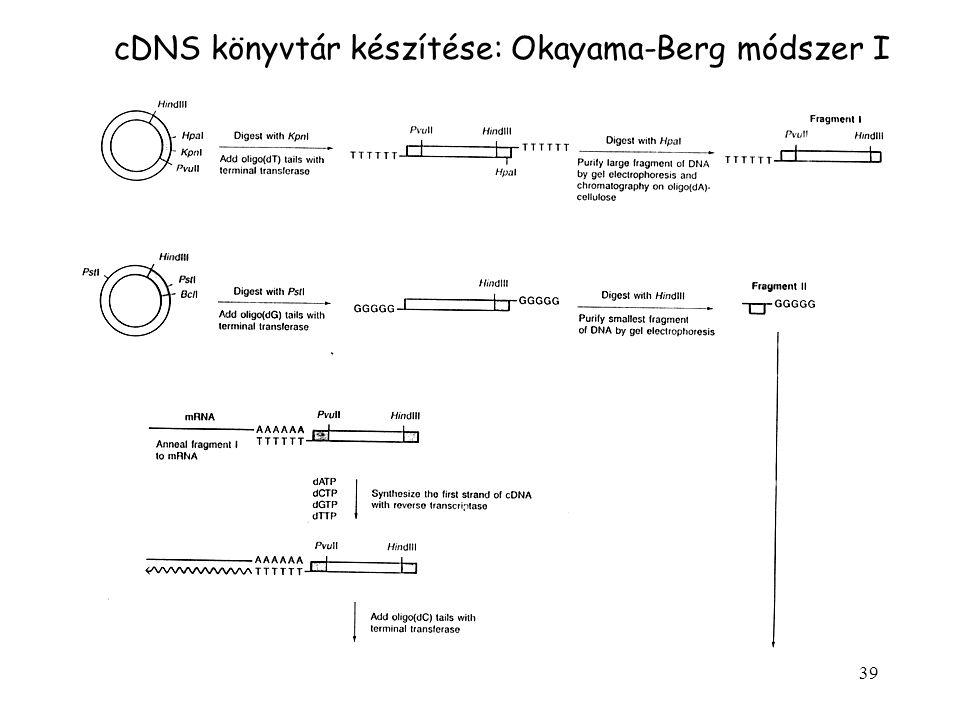 39 cDNS könyvtár készítése: Okayama-Berg módszer I