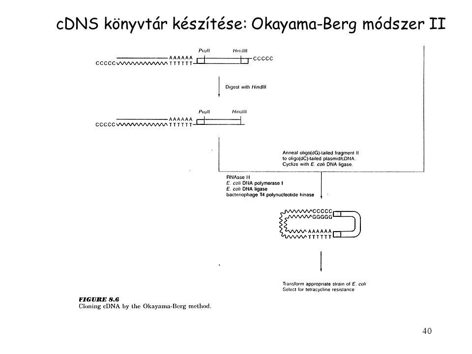 40 cDNS könyvtár készítése: Okayama-Berg módszer II