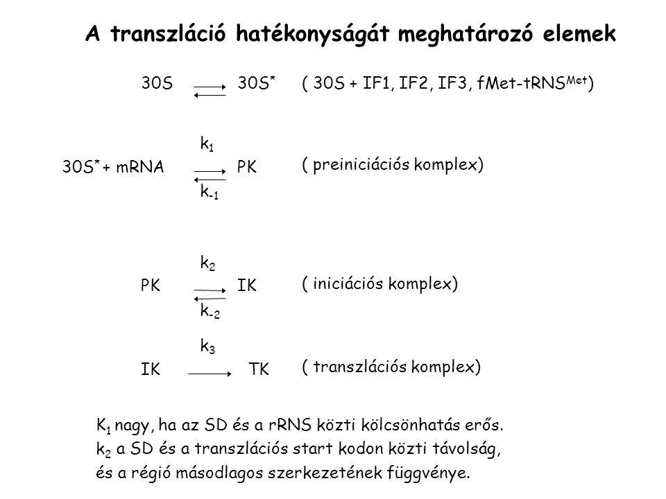 A transzláció hatékonyságát meghatározó elemek 30S30S * 30S * + mRNAPK k1k1 k -1 PK k2k2 k -2 IK TK k3k3 ( 30S + IF1, IF2, IF3, fMet-tRNS Met ) ( prei