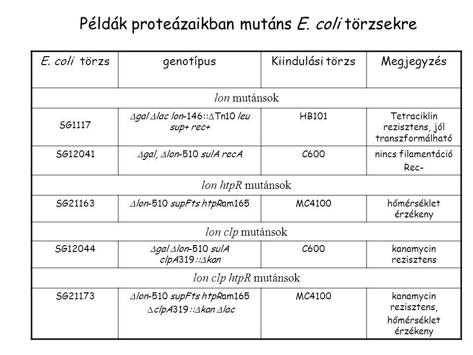 E. coli törzsgenotípusKiindulási törzsMegjegyzés lon mutánsok SG1117  gal  lac lon-146::  Tn10 leu sup+ rec+ HB101Tetraciklin rezisztens, jól trans