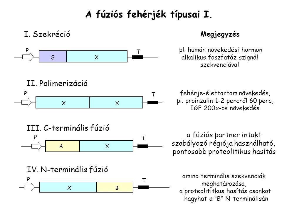 A fúziós fehérjék típusai I. I. Szekréció SX T P Megjegyzés pl. humán növekedési hormon alkalikus foszfatáz szignál szekvenciával II. Polimerizáció XX
