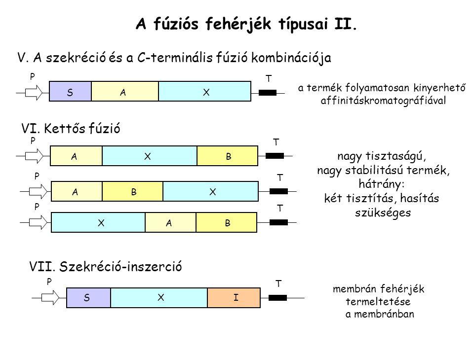 A fúziós fehérjék típusai II. V. A szekréció és a C-terminális fúzió kombinációja AXS T P a termék folyamatosan kinyerhető affinitáskromatográfiával V