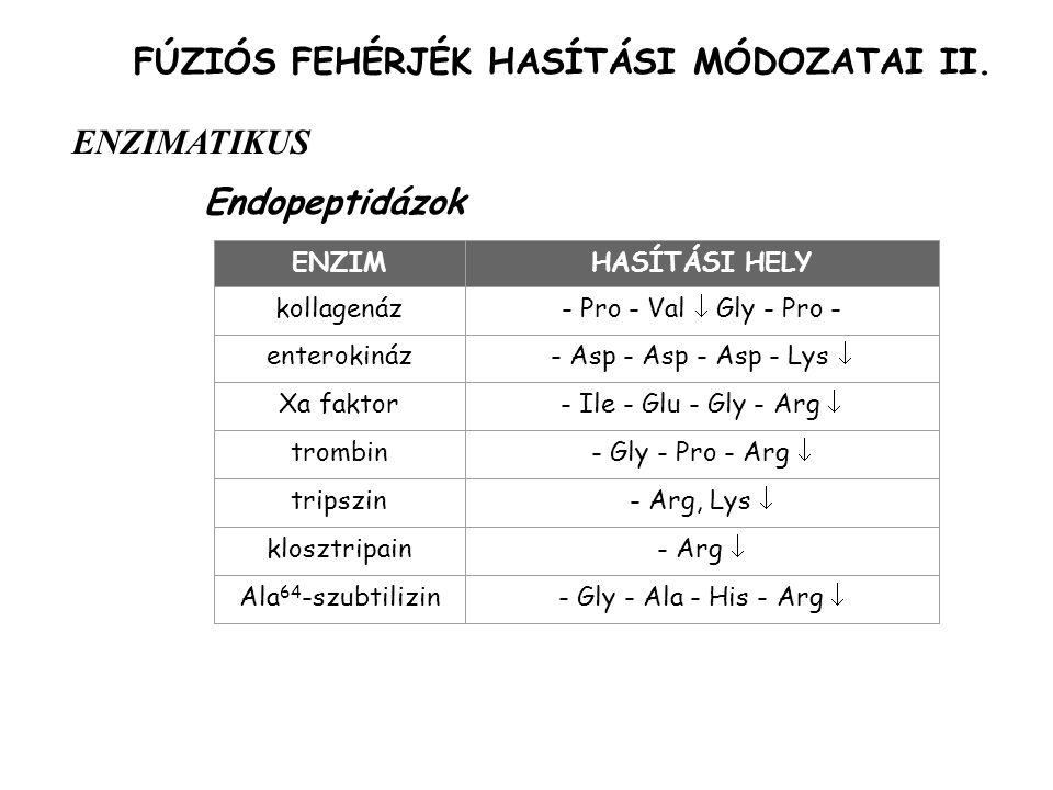 FÚZIÓS FEHÉRJÉK HASÍTÁSI MÓDOZATAI II. Endopeptidázok ENZIMATIKUS ENZIMHASÍTÁSI HELY kollagenáz- Pro - Val  Gly - Pro - enterokináz- Asp - Asp - Asp