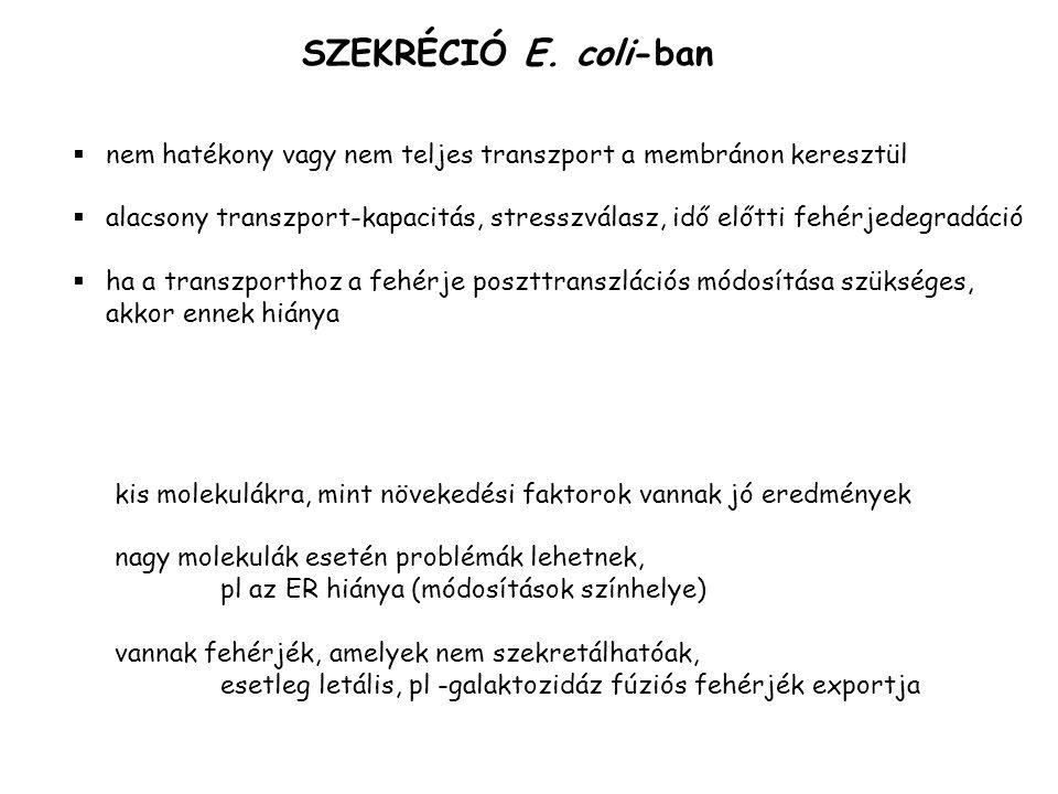 SZEKRÉCIÓ E. coli-ban  nem hatékony vagy nem teljes transzport a membránon keresztül  alacsony transzport-kapacitás, stresszválasz, idő előtti fehér