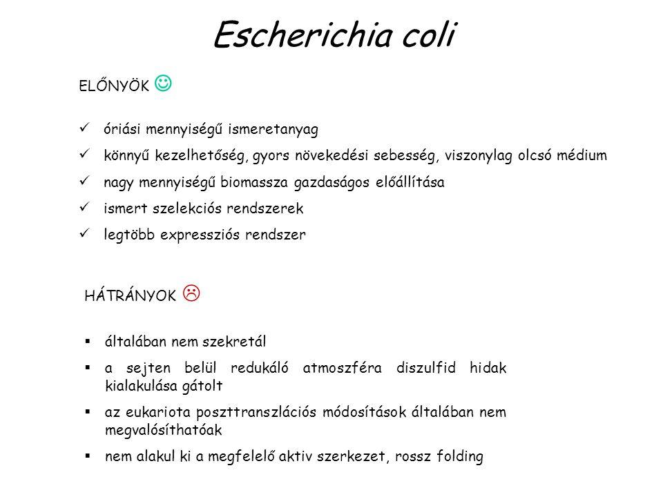 Escherichia coli HÁTRÁNYOK   általában nem szekretál  a sejten belül redukáló atmoszféra diszulfid hidak kialakulása gátolt  az eukariota poszttra