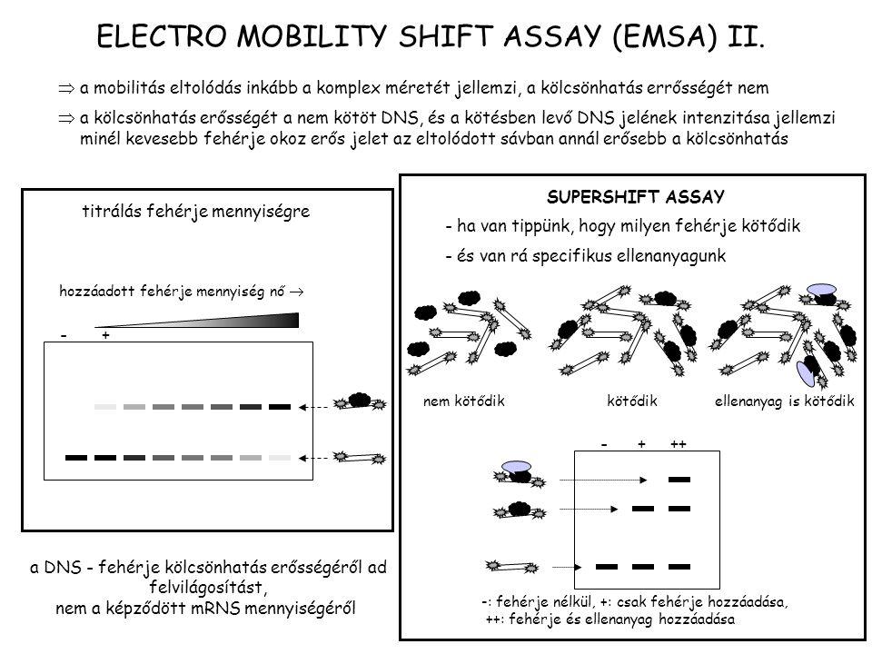 ELECTRO MOBILITY SHIFT ASSAY (EMSA) II.  a mobilitás eltolódás inkább a komplex méretét jellemzi, a kölcsönhatás errősségét nem  a kölcsönhatás erős