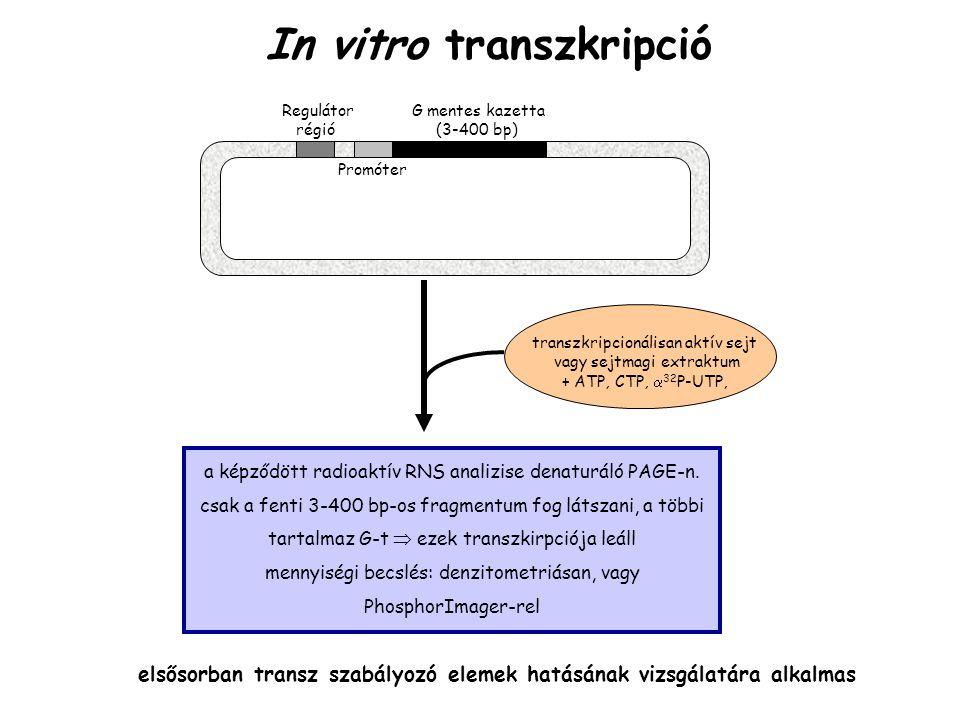 In vitro transzkripció Regulátor G mentes kazetta régió (3-400 bp) transzkripcionálisan aktív sejt vagy sejtmagi extraktum + ATP, CTP,  32 P-UTP, a k