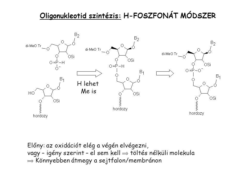 Oligonukleotid szintézis: H-FOSZFONÁT MÓDSZER Előny: az oxidációt elég a végén elvégezni, vagy – igény szerint – el sem kell  töltés nélküli molekula  Könnyebben átmegy a sejtfalon/membránon H lehet Me is