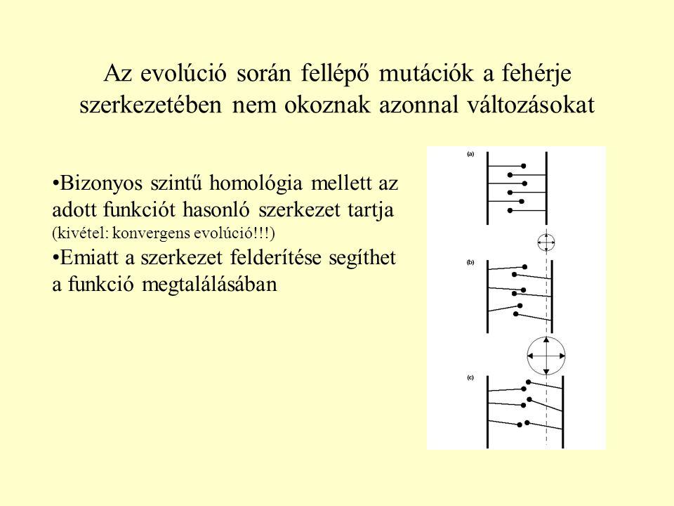 Az evolúció során fellépő mutációk a fehérje szerkezetében nem okoznak azonnal változásokat Bizonyos szintű homológia mellett az adott funkciót hasonló szerkezet tartja (kivétel: konvergens evolúció!!!) Emiatt a szerkezet felderítése segíthet a funkció megtalálásában