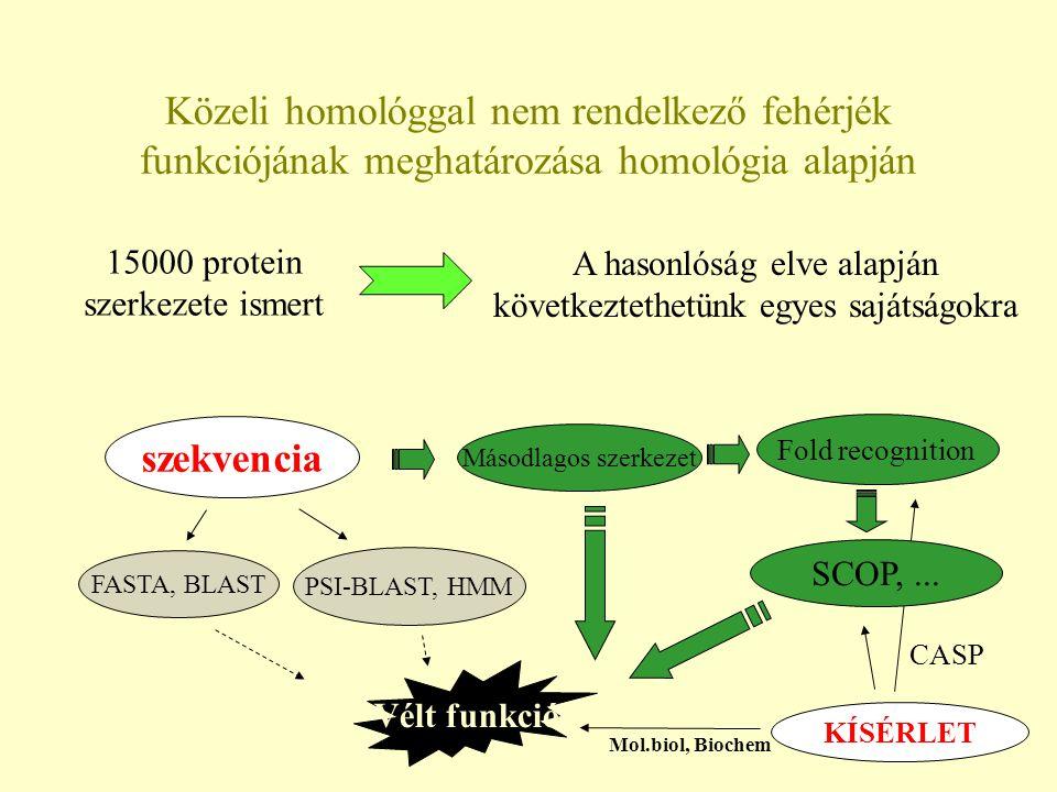 Közeli homológgal nem rendelkező fehérjék funkciójának meghatározása homológia alapján 15000 protein szerkezete ismert A hasonlóság elve alapján következtethetünk egyes sajátságokra szekvencia KÍSÉRLET FASTA, BLAST PSI-BLAST, HMM Másodlagos szerkezet Fold recognition Vélt funkció Mol.biol, Biochem SCOP,...