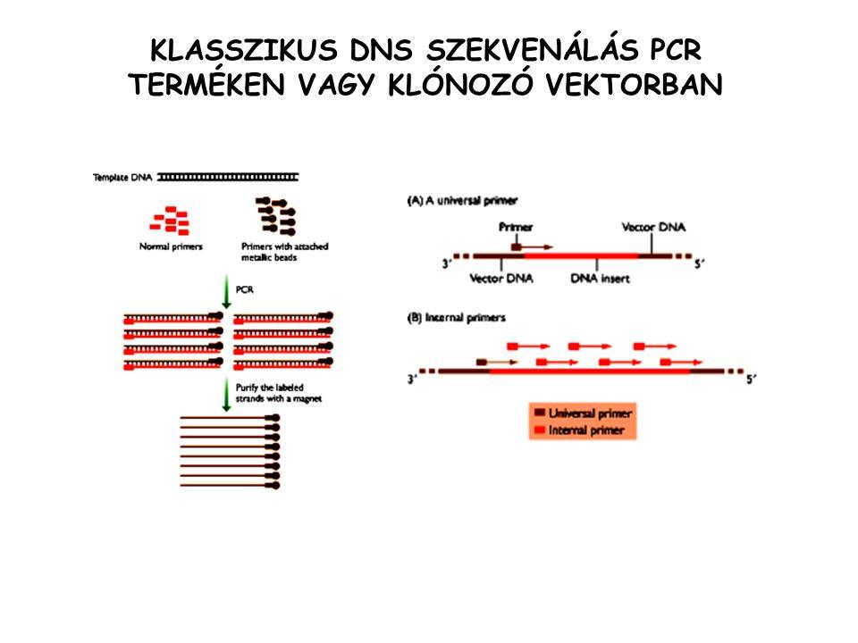 KLASSZIKUS DNS SZEKVENÁLÁS PCR TERMÉKEN VAGY KLÓNOZÓ VEKTORBAN