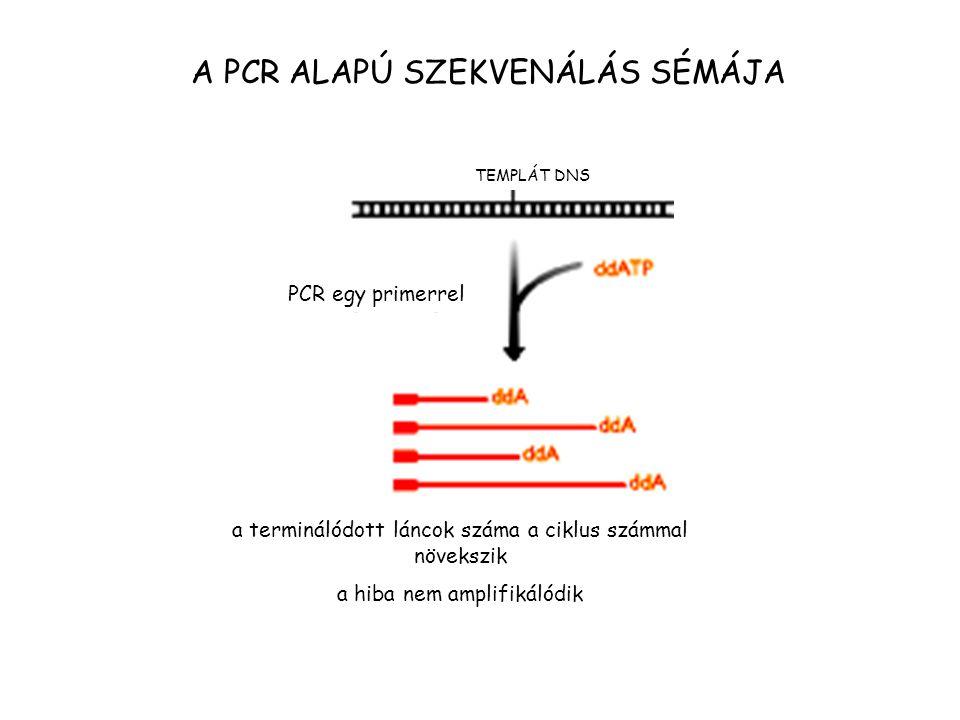 A PCR ALAPÚ SZEKVENÁLÁS SÉMÁJA TEMPLÁT DNS PCR egy primerrel a terminálódott láncok száma a ciklus számmal növekszik a hiba nem amplifikálódik