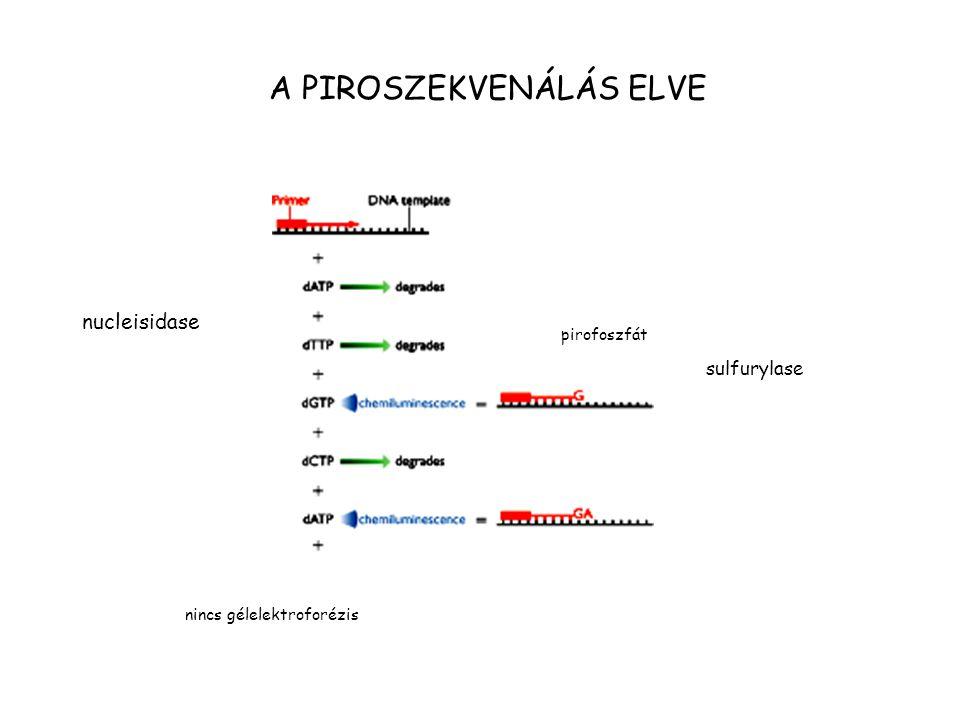 A PIROSZEKVENÁLÁS ELVE pirofoszfát nincs gélelektroforézis nucleisidase sulfurylase