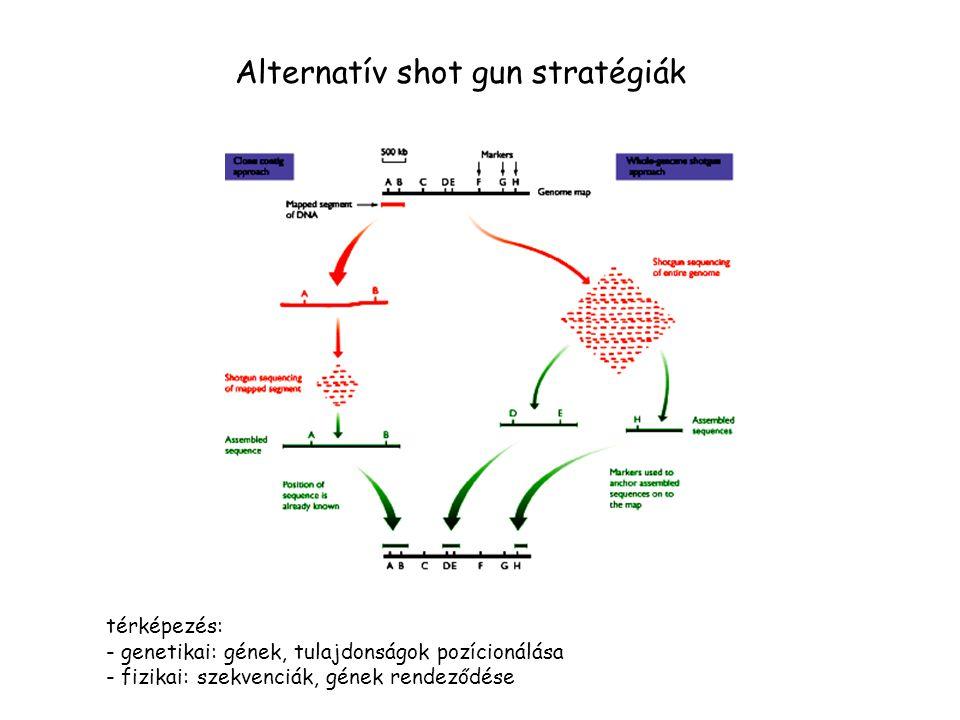 Alternatív shot gun stratégiák térképezés: - genetikai: gének, tulajdonságok pozícionálása - fizikai: szekvenciák, gének rendeződése