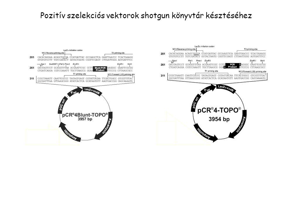 Pozitív szelekciós vektorok shotgun könyvtár késztéséhez