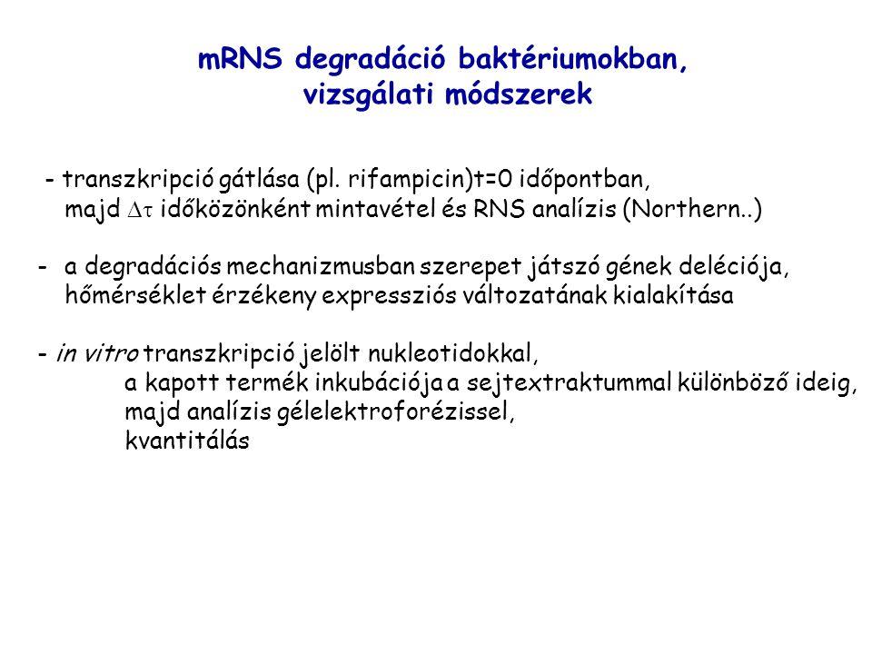 - transzkripció gátlása (pl. rifampicin)t=0 időpontban, majd  időközönként mintavétel és RNS analízis (Northern..) -a degradációs mechanizmusban sze