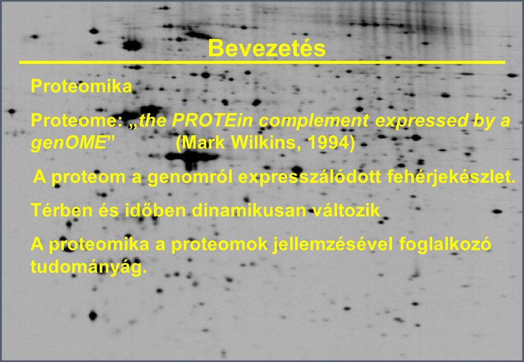 Izoelektromos fókuszálás Tálcákban történik A stripek olajjal vannak lefedve Limitált áramerősség mellett (50 µA) Magas feszültség mellett (10 000 V, 17 cm-es stripnél) 20 O C-on Általában optimalizálni kell a futtatási időt