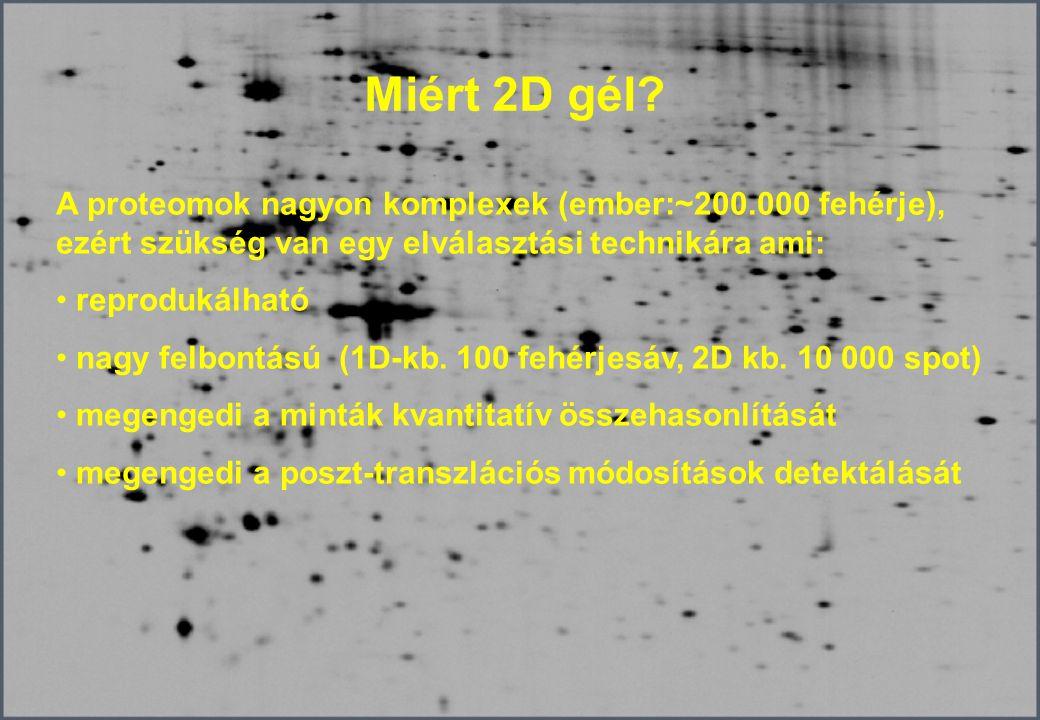 Hasznos linkek http://www.weihenstephan.de/blm/deg/manual/manualwork2html02test.htm http://www.expressionproteomics.com http://www.