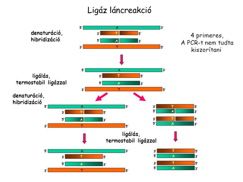 Ligálás és a PCR kombinálása