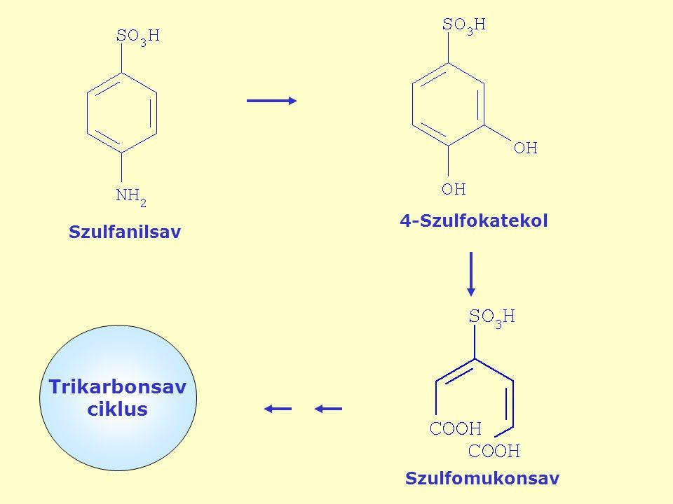 Szulfanilsav 4-Szulfokatekol Szulfomukonsav Trikarbonsav ciklus