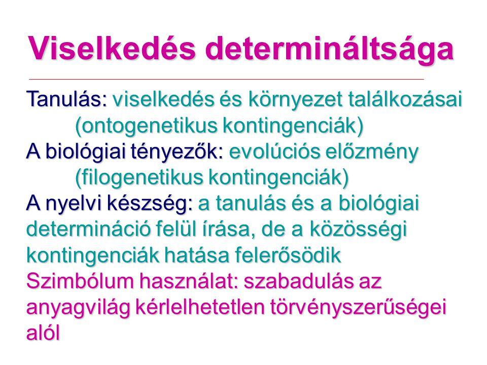 Viselkedés determináltsága Tanulás: viselkedés és környezet találkozásai (ontogenetikus kontingenciák) A biológiai tényezők: evolúciós előzmény (filogenetikus kontingenciák) A nyelvi készség: a tanulás és a biológiai determináció felül írása, de a közösségi kontingenciák hatása felerősödik Szimbólum használat: szabadulás az anyagvilág kérlelhetetlen törvényszerűségei alól