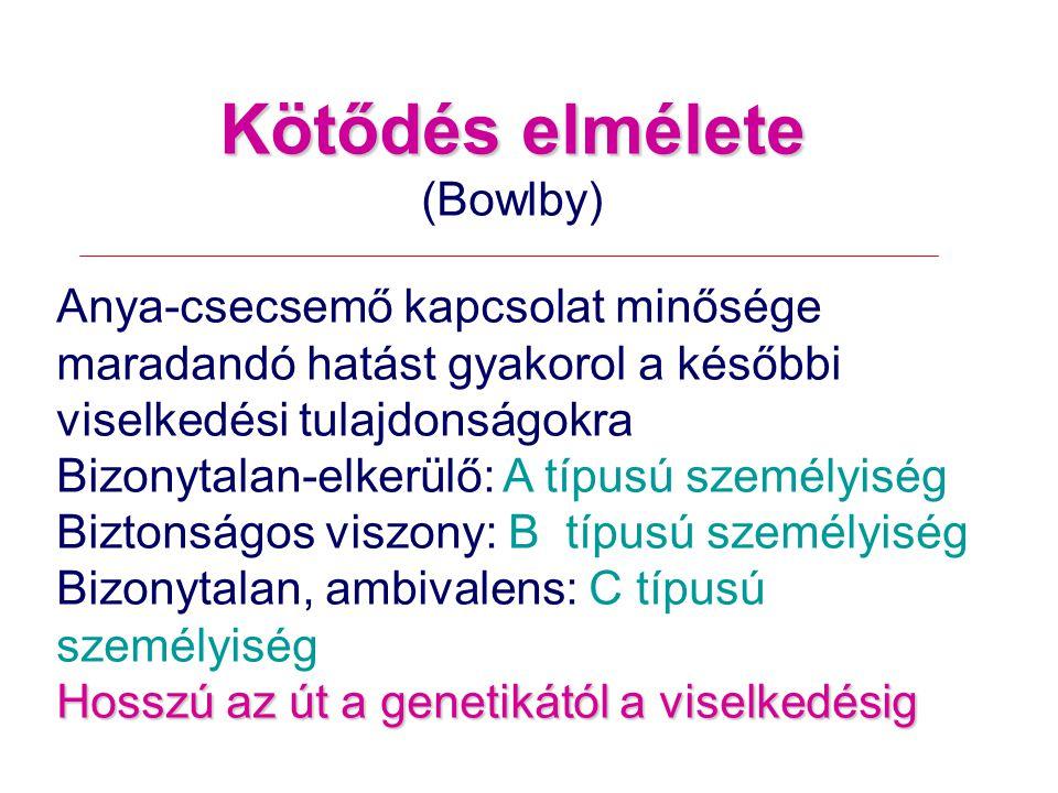 Kötődés elmélete (Bowlby) Anya-csecsemő kapcsolat minősége maradandó hatást gyakorol a későbbi viselkedési tulajdonságokra Bizonytalan-elkerülő: A típusú személyiség Biztonságos viszony: B típusú személyiség Bizonytalan, ambivalens: C típusú személyiség Hosszú az út a genetikától a viselkedésig