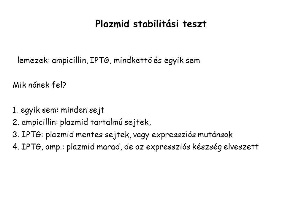 lemezek: ampicillin, IPTG, mindkettő és egyik sem Mik nőnek fel? 1. egyik sem: minden sejt 2. ampicillin: plazmid tartalmú sejtek, 3. IPTG: plazmid me