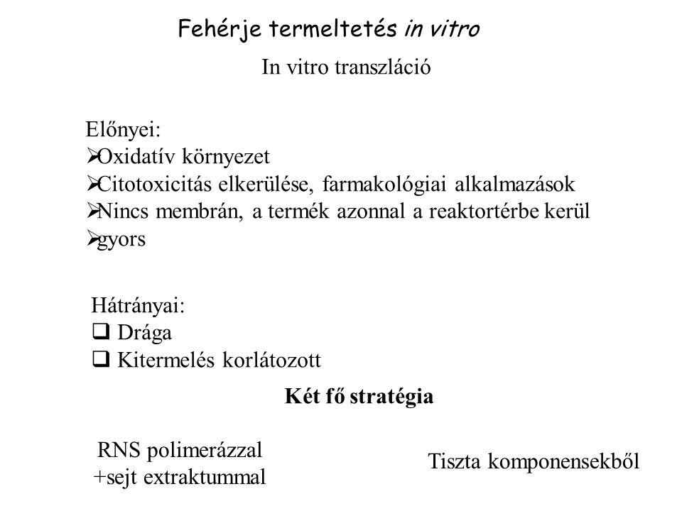 Fehérje termeltetés in vitro In vitro transzláció Előnyei:  Oxidatív környezet  Citotoxicitás elkerülése, farmakológiai alkalmazások  Nincs membrán