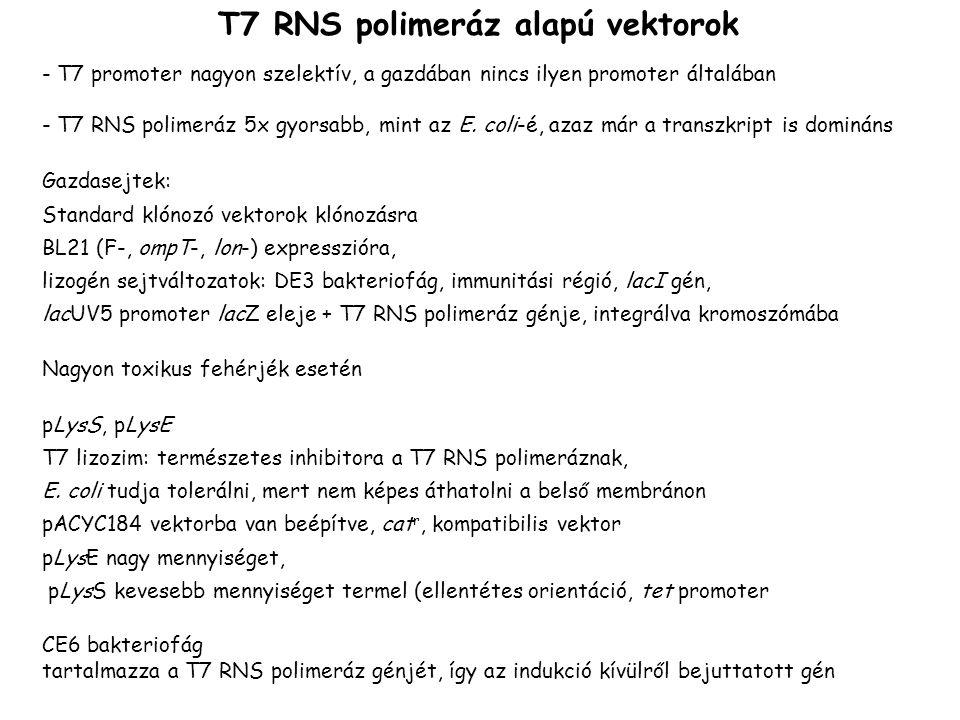 T7 RNS polimeráz alapú vektorok - T7 promoter nagyon szelektív, a gazdában nincs ilyen promoter általában - T7 RNS polimeráz 5x gyorsabb, mint az E. c