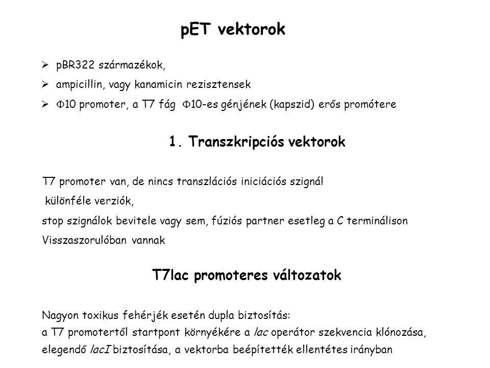 pET vektorok  pBR322 származékok,  ampicillin, vagy kanamicin rezisztensek   10 promoter, a T7 fág  10-es génjének (kapszid) erős promótere T7 pr
